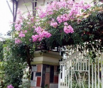 Hồng Thiên Hương