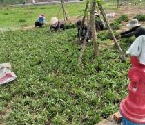 Thi Công công viên Khu dân cư 55-Tây Lân, Bình Tân HCM 12.2020