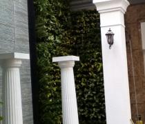 Thi công tường xanh tại PEGASUITE- khu Biệt thự Q8. Tp. HCM
