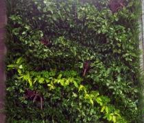Tường xanh Cty Đầu Tư Phương Việt (06A Sư Thiện Chiếu, P7, Q3, TP HCM)-04/2017