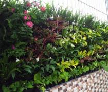 Tường xanh Văn Phòng Công Ty-04/2017