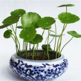 Tiền vào túi như nước khi trồng 12 cây cảnh hợp với tuổi của bạn