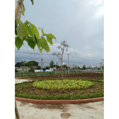 Công viên Khu dân cư Bình chiểu, Thủ Đức, Tp HCM- 8/2016